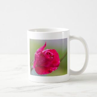 rose after the rain in the garden coffee mug