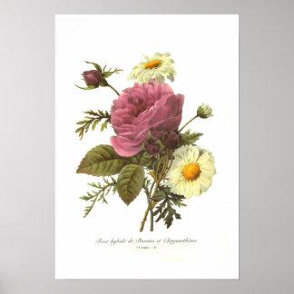 Rose and Chrysanthemum Poster