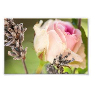 Rose and lavender photo