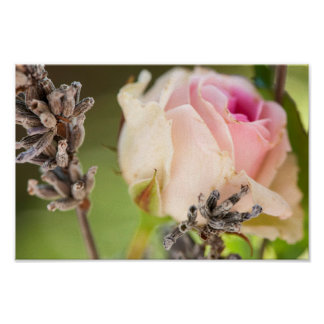 Rose and lavender poster