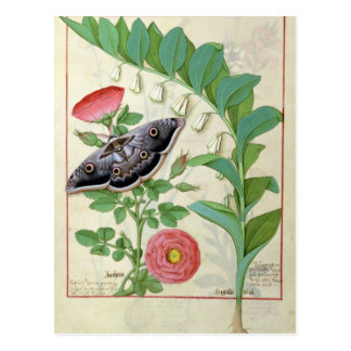 Rose and Polygonatum Postcard