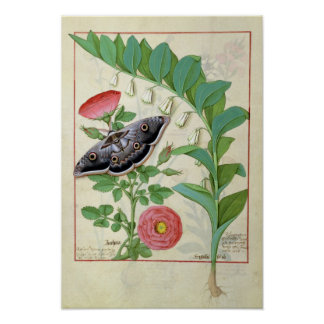 Rose and Polygonatum Poster