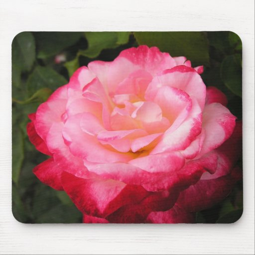 Rose Beauty: 2-toned pink rose Mousepad