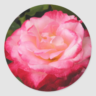 Rose Beauty: 2-toned pink rose Sticker