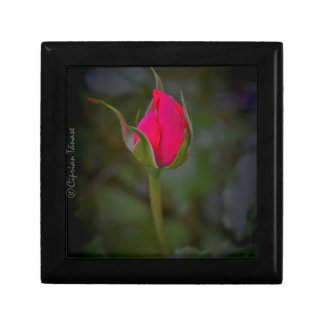 Rose Bloom Small Square Gift Box