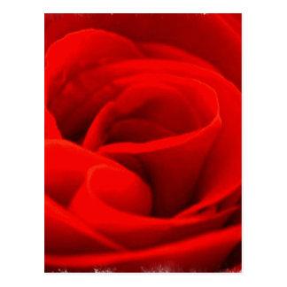 Rose Blossom Postcard