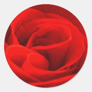 Rose Blossom Sticker