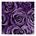 Rose Bouquet in Purple Posters