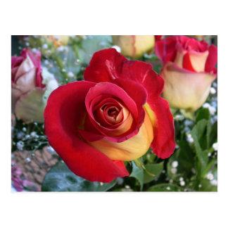 Rose Bouquet Picture Postcard