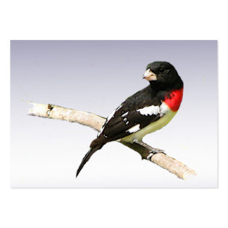 Rose-breasted Grosbeak ATC Large Business Cards (Pack Of 100)