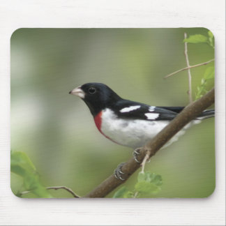 Rose Breasted Grosbeak Mouse Pad