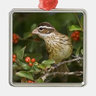 Rose-breasted Grosbeak Pheucticus 2 Christmas Ornament