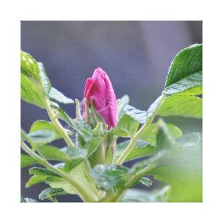 Rose Bud Home decor