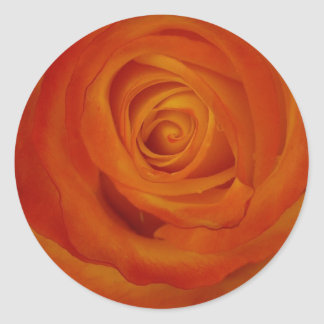Rose bud round sticker