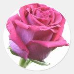 Rose Bud Sticker
