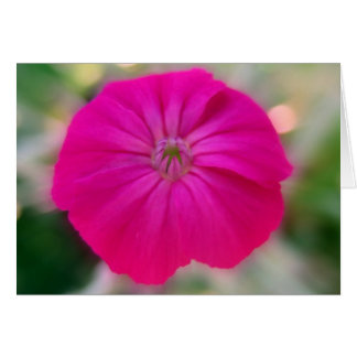 Rose Campion Note Card