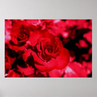 Rose Coloured Glasses Poster