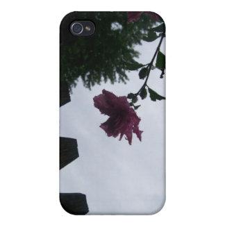 Rose dew fence gloomy iPhone 4/4S case