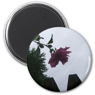 Rose dew fence gloomy 6 cm round magnet