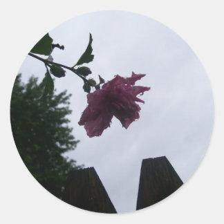 Rose dew fence gloomy classic round sticker