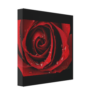 Rose Drops Gallery Wrapped Canvas