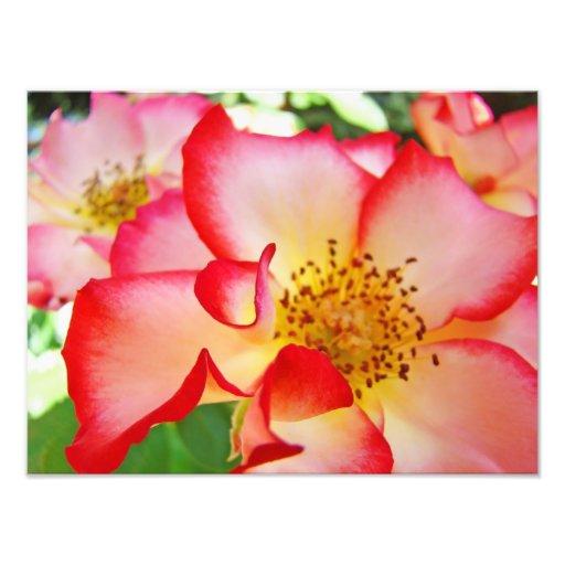 Rose Floral Photography Canvas prints Art Photo