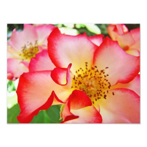 Rose Floral Photography Canvas prints Photo
