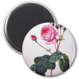 Rose flower, Pierre Joseph Redouté Magnet
