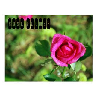 Rose Flower Postcard