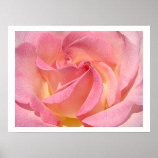 Rose Flower Spiral Floral art prints Pink Posters