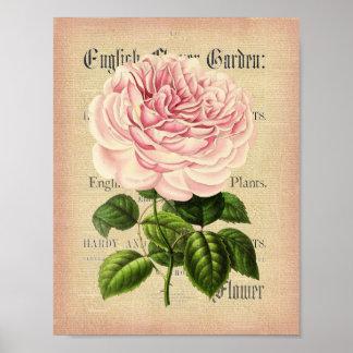 Rose flower vintage feminine floral poster
