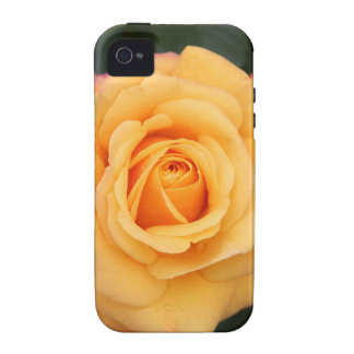 rose flowers flower  love wife sweetheart couple Case-Mate iPhone 4 covers