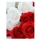 rose flowers flower white red love postcard