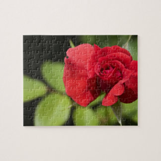 Rose For My Love Puzzles