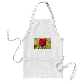 Rose Förkläden