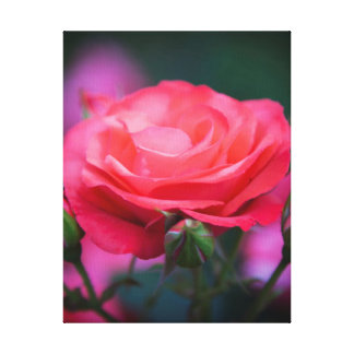 Rose from the Portland Rose Garden Canvas Prints