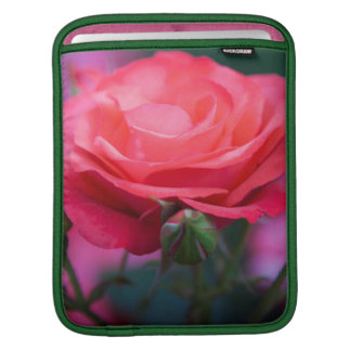 Rose from the Portland Rose Garden iPad Sleeve