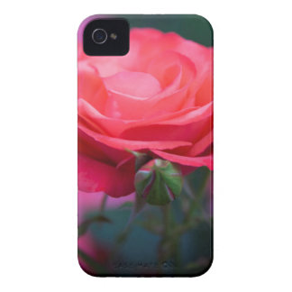 Rose from the Portland Rose Garden iPhone 4 Case