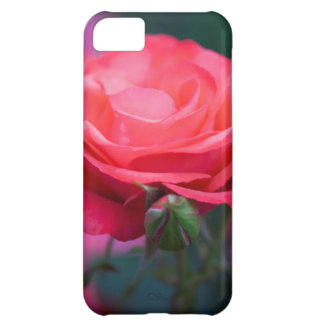 Rose from the Portland Rose Garden iPhone 5C Case