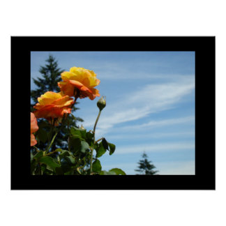 Rose Garden art prints Orange Roses Botanical Poster