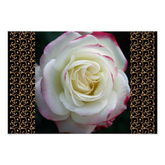 Rose Garden Mod Chic Classy Floral Blossoms Poster