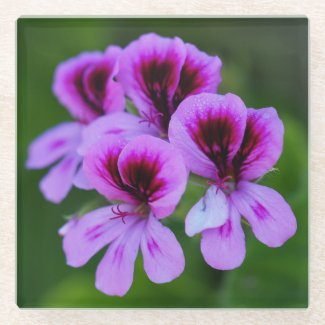 Rose Geranium Floral Glass Coaster