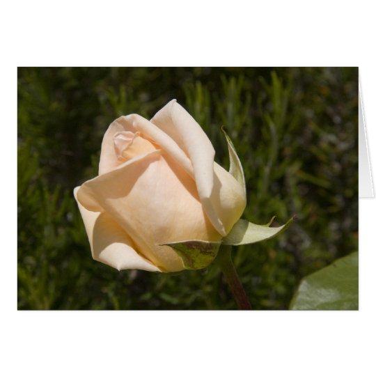 Rose greetings card blank