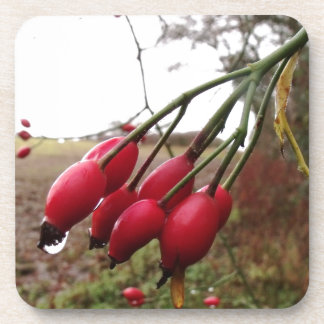 Rose Hips And Rain Drink Coaster