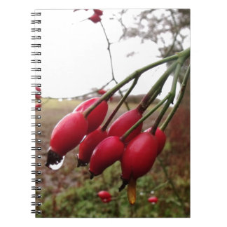 Rose Hips And Rain Notebooks