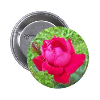 Rose in Bloom 6 Cm Round Badge