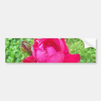 Rose in Bloom Bumper Sticker