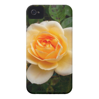 Rose iPhone 4 Covers