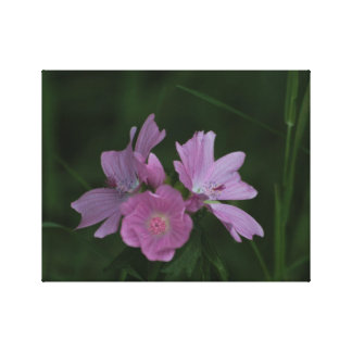 Rose madder - Geranium Pratense Canvas Print
