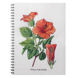 Rose of china Hibiscus rosa sinensis Spiral Note Book